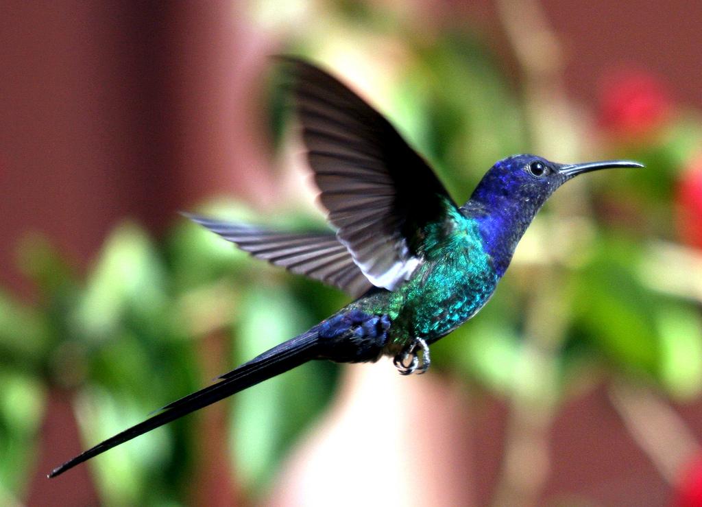#FactsThursday Jamaica's National Bird